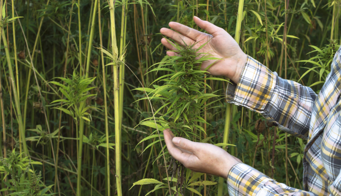 Banks No Longer Required To File Suspicious Activity Reports For Hemp Growers